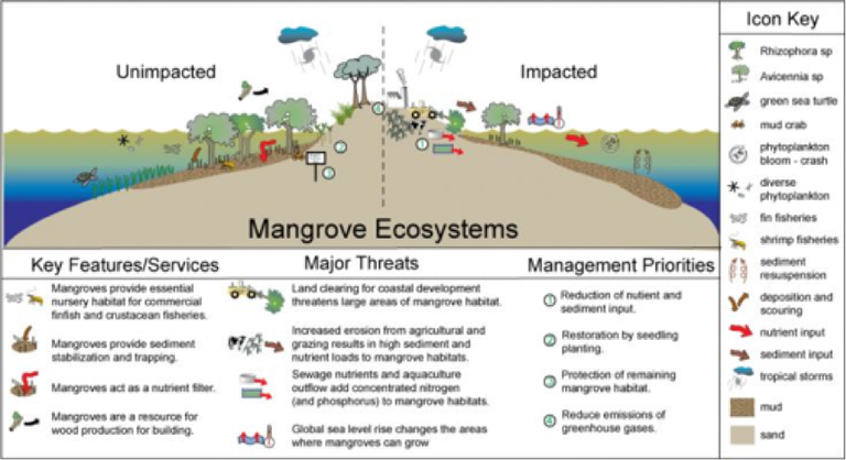 Mangrove ecosystems.png