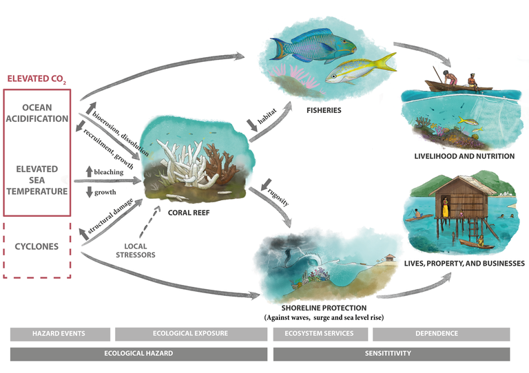 Picture showing the dependance of people on coral reefs and how a high CO2 concentration exacerbate this dependance.