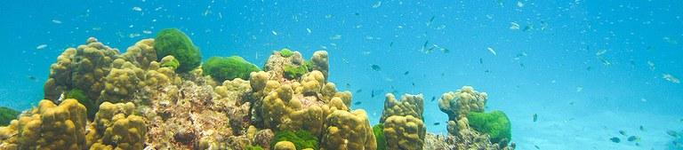 coral reefs_credit linvoyage.com.jpg